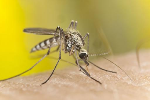 moustiques-mouches